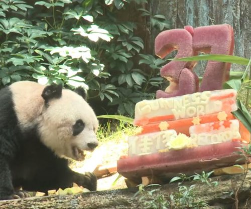 World's oldest panda turns 37 with specially-made cake