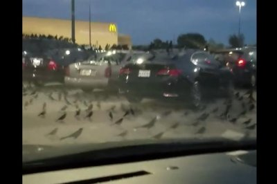 Hundreds of blackbirds descend on Texas Walmart parking lot