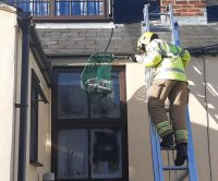 Gull tangled in fishing line rescued from rooftop