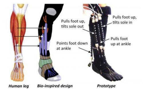 Soft, flexible robotic device aimed at helping foot/ankle problems