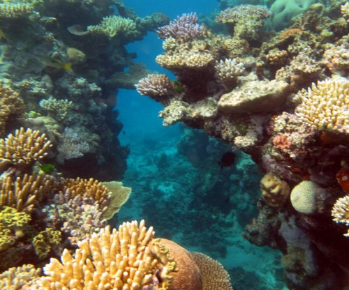 Scientists predict worst coral bleaching in 20 years