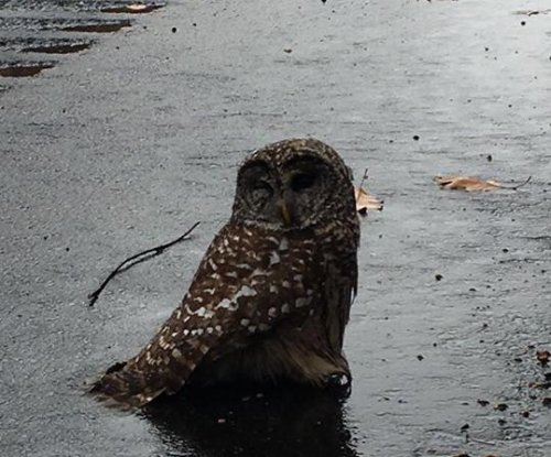 Connecticut state trooper rescues owl from highway