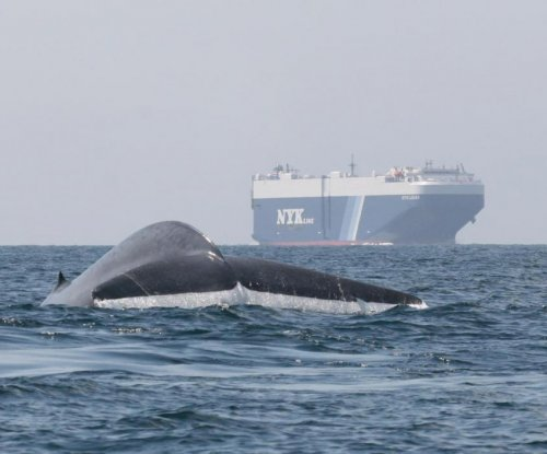 New model to help ships avoid collisions with blue whales