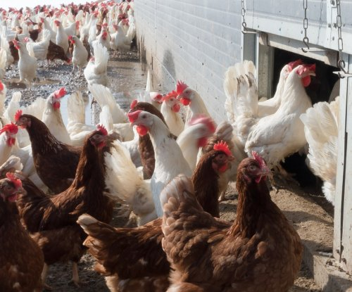 CDC: Backyard poultry-related salmonella cases cross 200