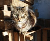 Runaway cat reunited with family after 14 years in Britain