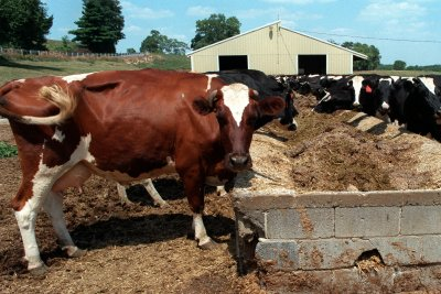 Study: U.S. dairy farmers could lose $1.3 billion without Japan trade deal