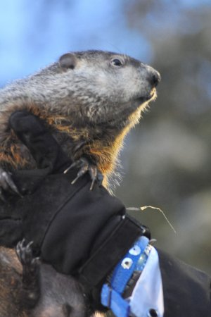 Woo-hoo! Phil predicts early spring