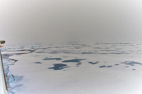 Scientists discover melting sea ice means more sea life