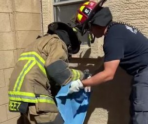 Firefighters rescue cat trapped in cinder block wall