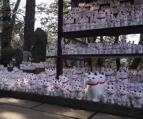 Tokyo temple displays collection of 1,000 'lucky cat' figurines