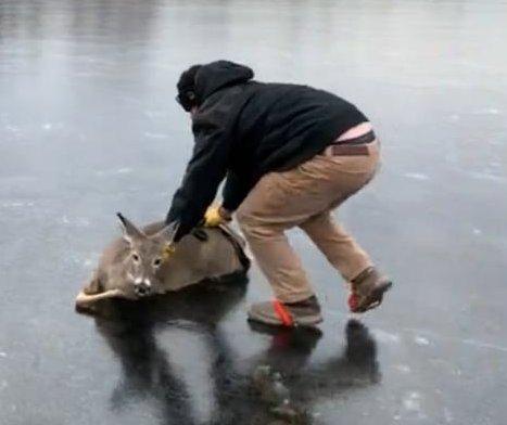 Wisconsin man slides stranded deer across frozen reservoir
