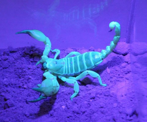 Burrow-building scorpions have consistent tastes