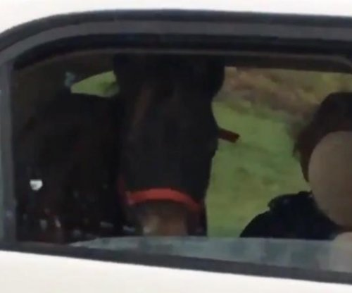 Horse riding in back seat of car surprises fellow travelers