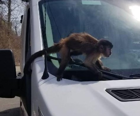 Loose monkey found in Chicago ambulance service garage