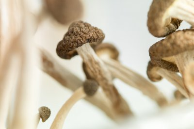 Oregon votes to legalize psychedelic mushrooms in therapy settings