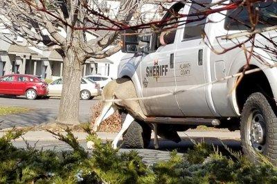 Deputies rescue deer stuck in patrol vehicle's wheel well