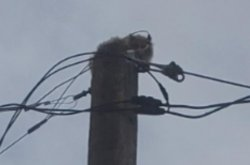 Cat rescued after stranded for three days atop Nevada utility pole