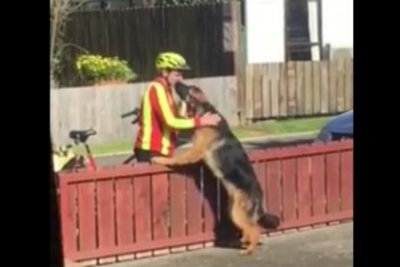 New Zealand man praises mailman's friendship with 'unapproachable' dog