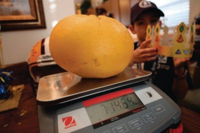 Louisiana couple grow world's largest, heaviest grapefruit