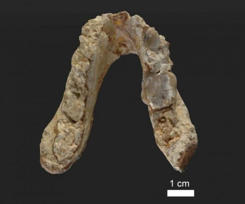 Human-chimp split occurred in the Mediterranean, not East Africa, researchers argue