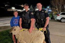 Escaped sheep runs loose through residential neighborhood in Utah