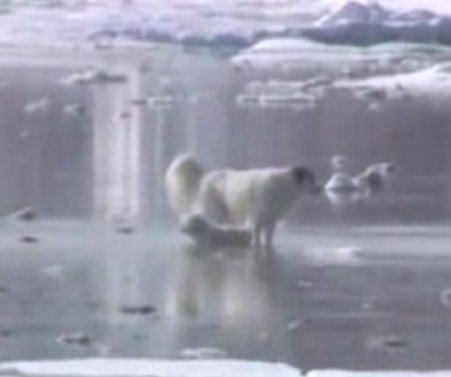 Man, two dogs rescued from frozen Mass. marsh