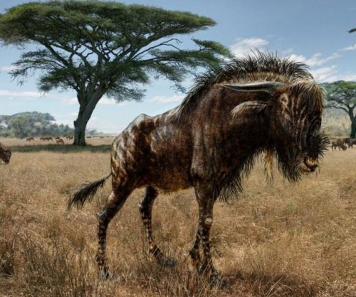 Ancient wildebeest-like animal had the nose of a hadrosaur