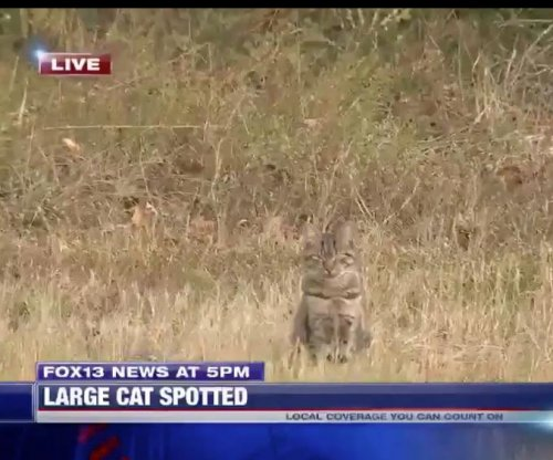 House cat interrupts news report of 'large cat' loose in Mississippi