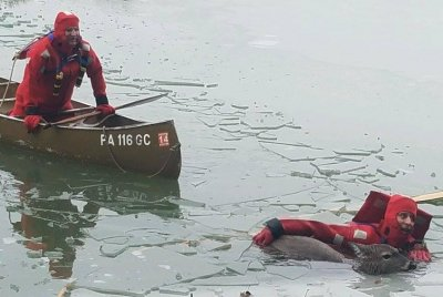 Deer rescued after falling through ice on frozen lake in Pennsylvania