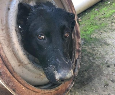 Dog with head stuck in wheel rim rescued in California