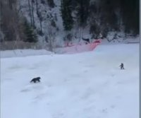 Skier chased by bear at Romanian resort