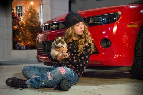 Grumpy Cat Christmas movie image released