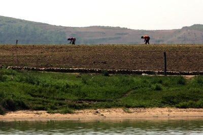U.N. food aid to North Korea declined in February