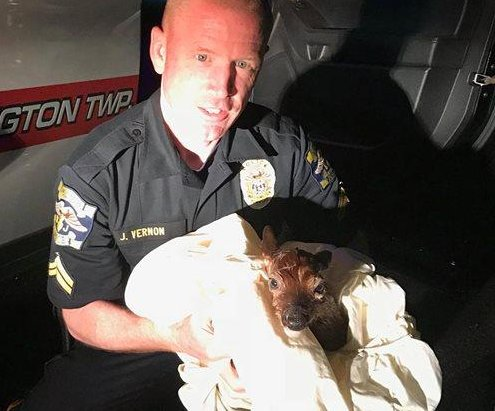 Police officer performs emergency C-section to save unborn fawn