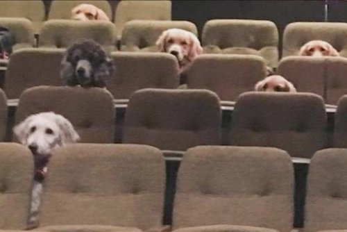 Service dogs attend live musical as part of training
