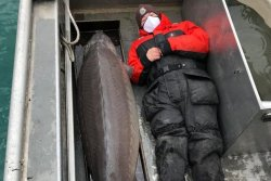 Conservation officials catch 6-foot, 10-inch sturgeon in Michigan