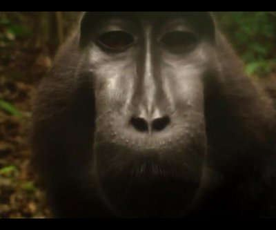 Video trap captures rare black-crested macaque chattering in front of camera