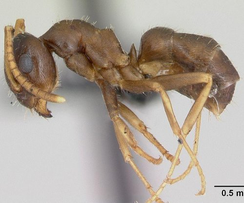 'Super ants' invading British gardens faster than ever