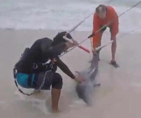 Kiteboarders rescue beached dolphin in Mexico