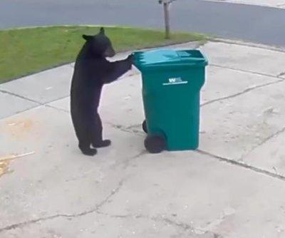 Bear wheels Florida man's trash can back up the driveway