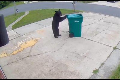 Bear wheels Florida man's trash can back up the driveway