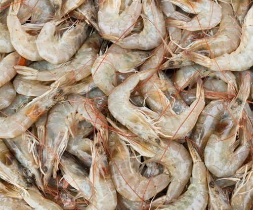 Scientists make grocery bags out of shrimp shells