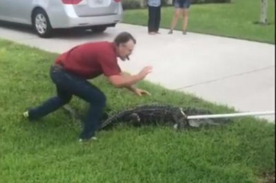 Alligator turns up in Florida man's fenced-in yard