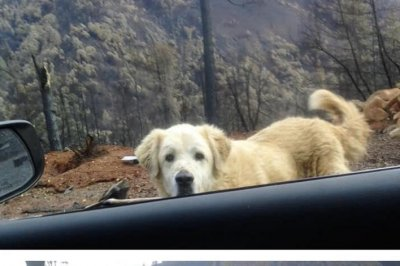 Rescue groups work to reunite pets, owners after Northern California fire