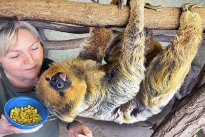 50-year-old sloth in German zoo dubbed world's oldest