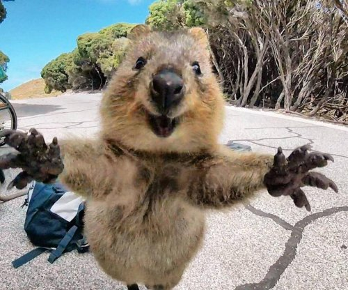 Australian cyclist's GoPro captures smiling quokka's adorable leap