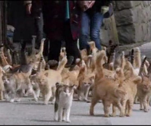 Feral felines run amok on Japan's 'Cat Island'