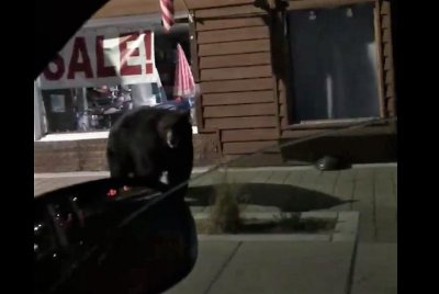 California deputy spots huge brown bear on city street