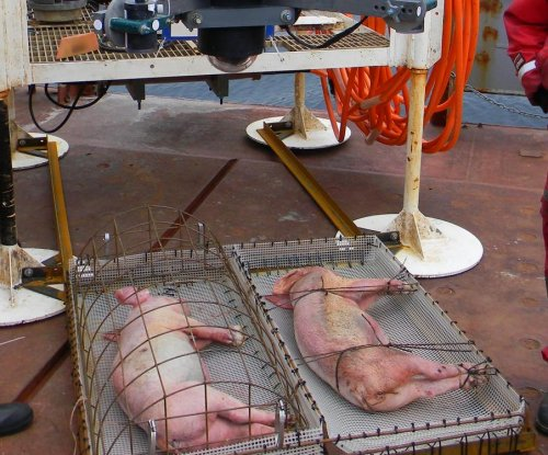 Scientists study body decomposition in the deep sea