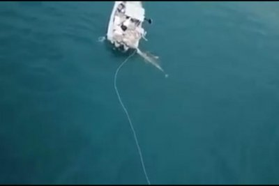Great white shark attacks fishing boat to defend crab pot